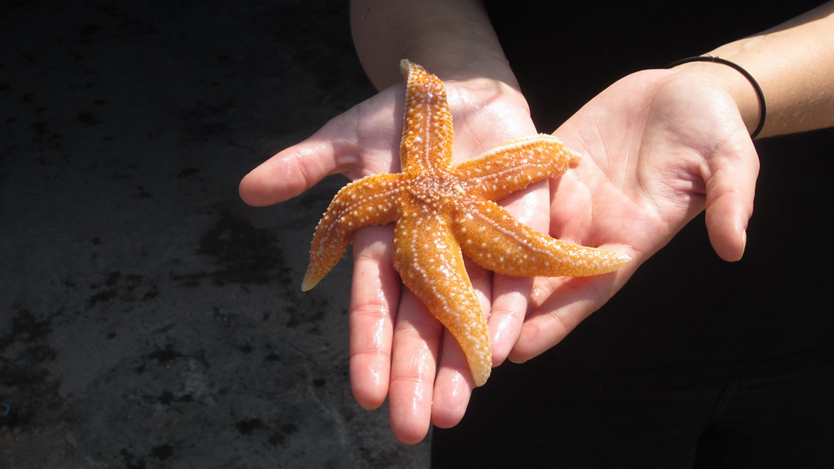 Hold a starfish
